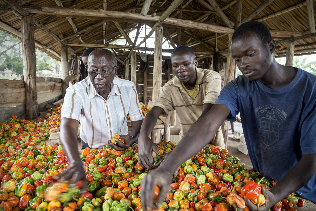 Hivos and IIED launch Sustainable Diets programme